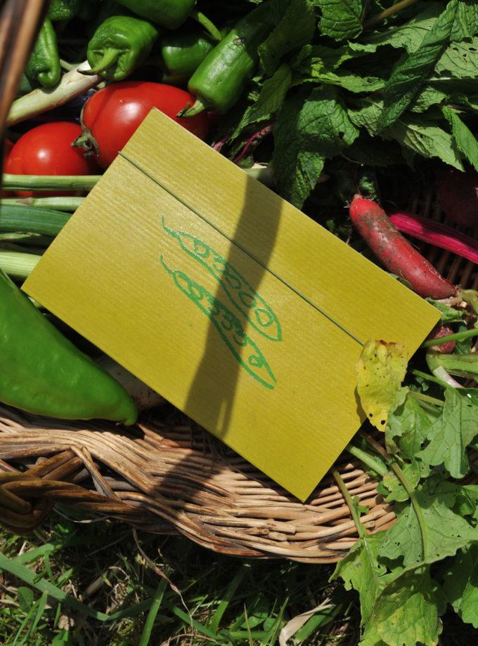 Graine - Collaboration La Compagnie du Kraft - Carnet Les Graines vert